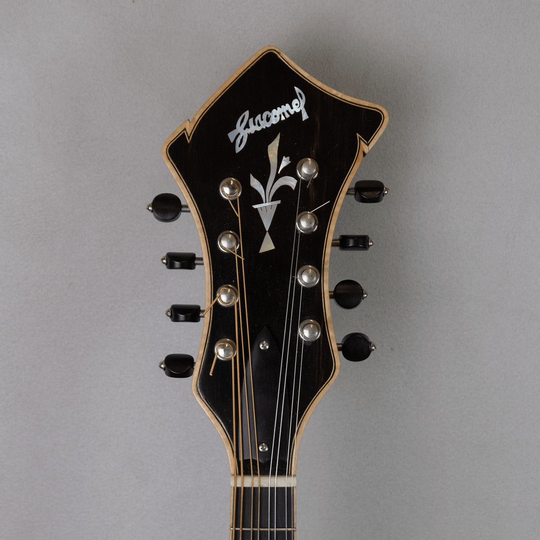 mandolin jazz 5 headstock