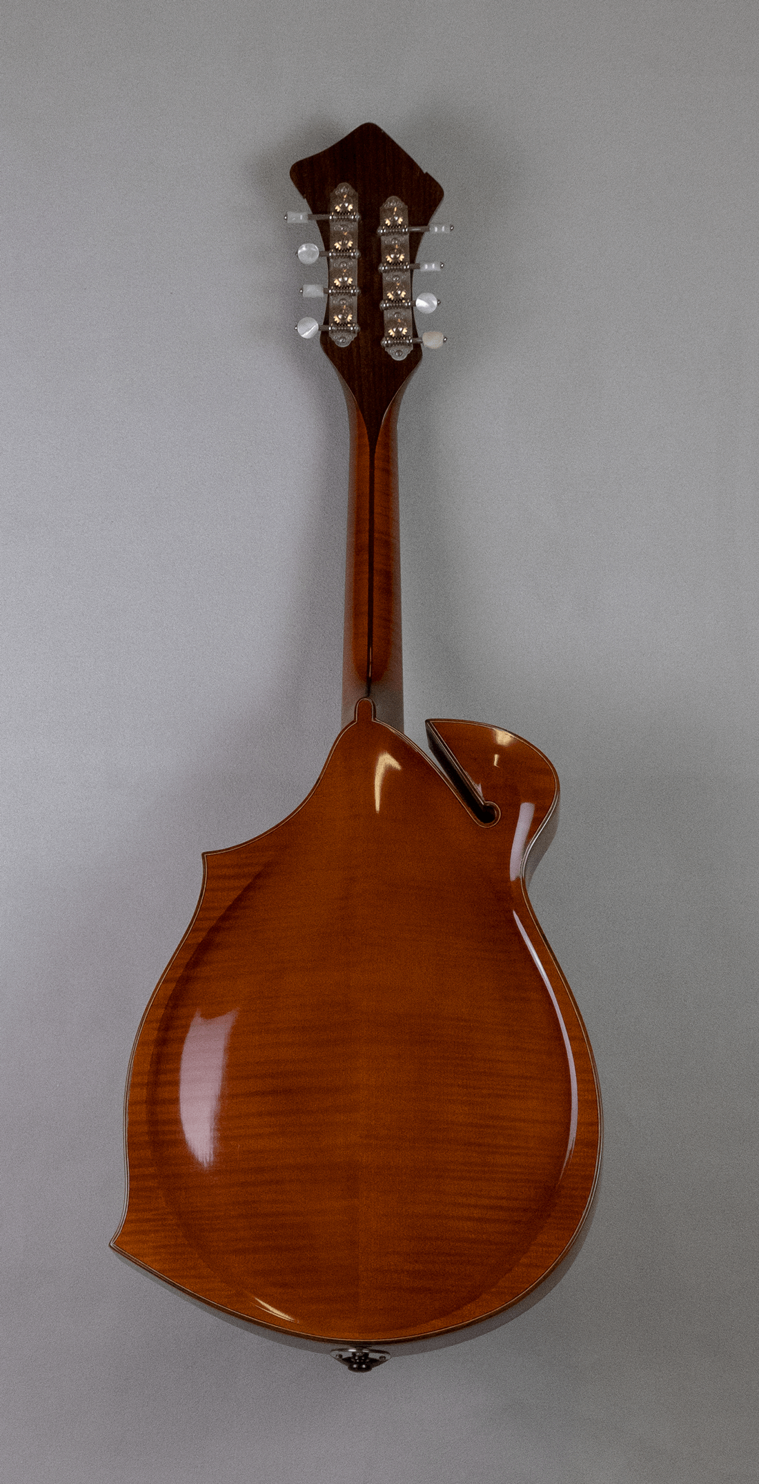 mandola jazz 5 back