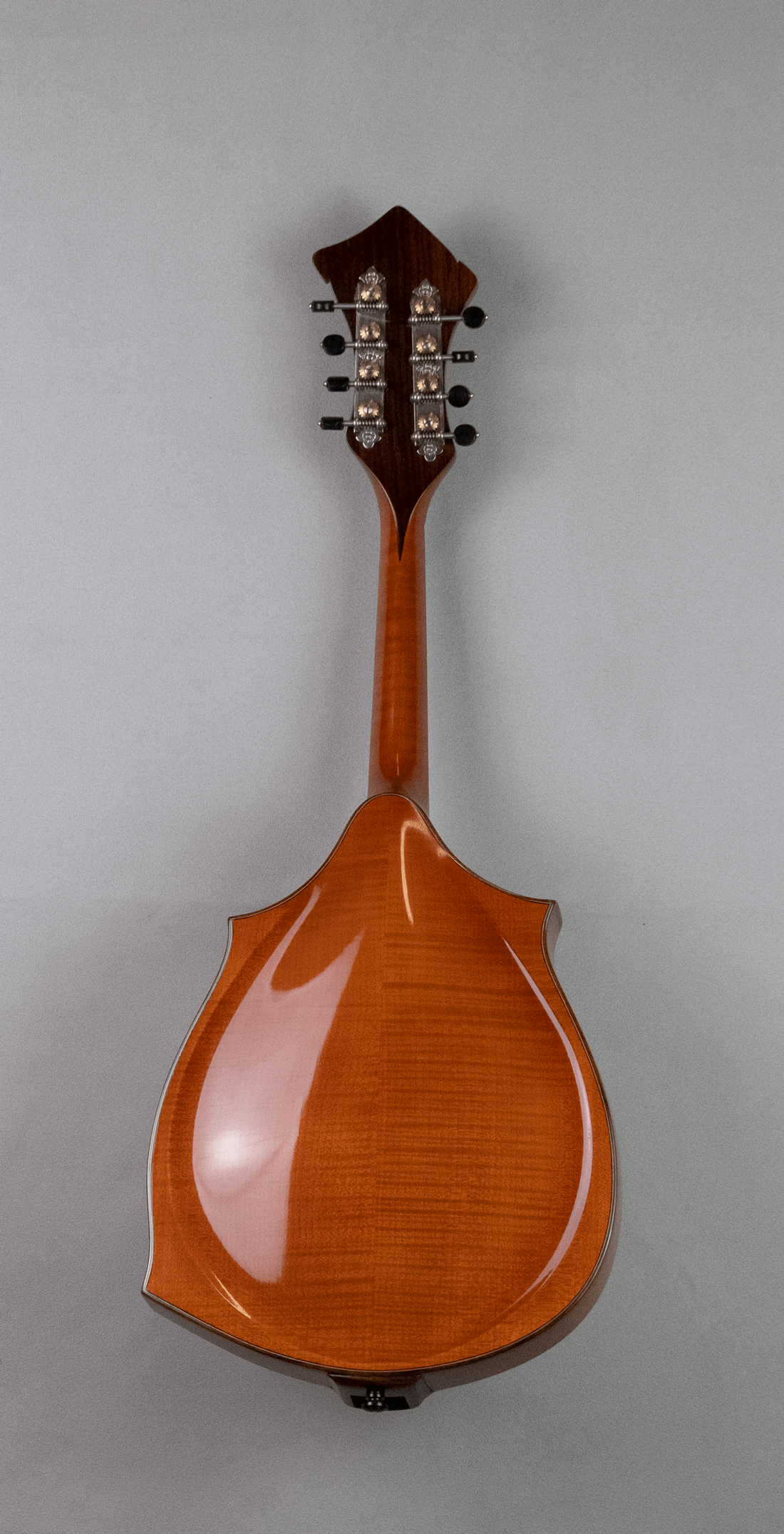 mandolin jazz 3 back
