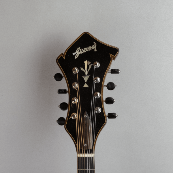 mandolin jazz 3 headstock