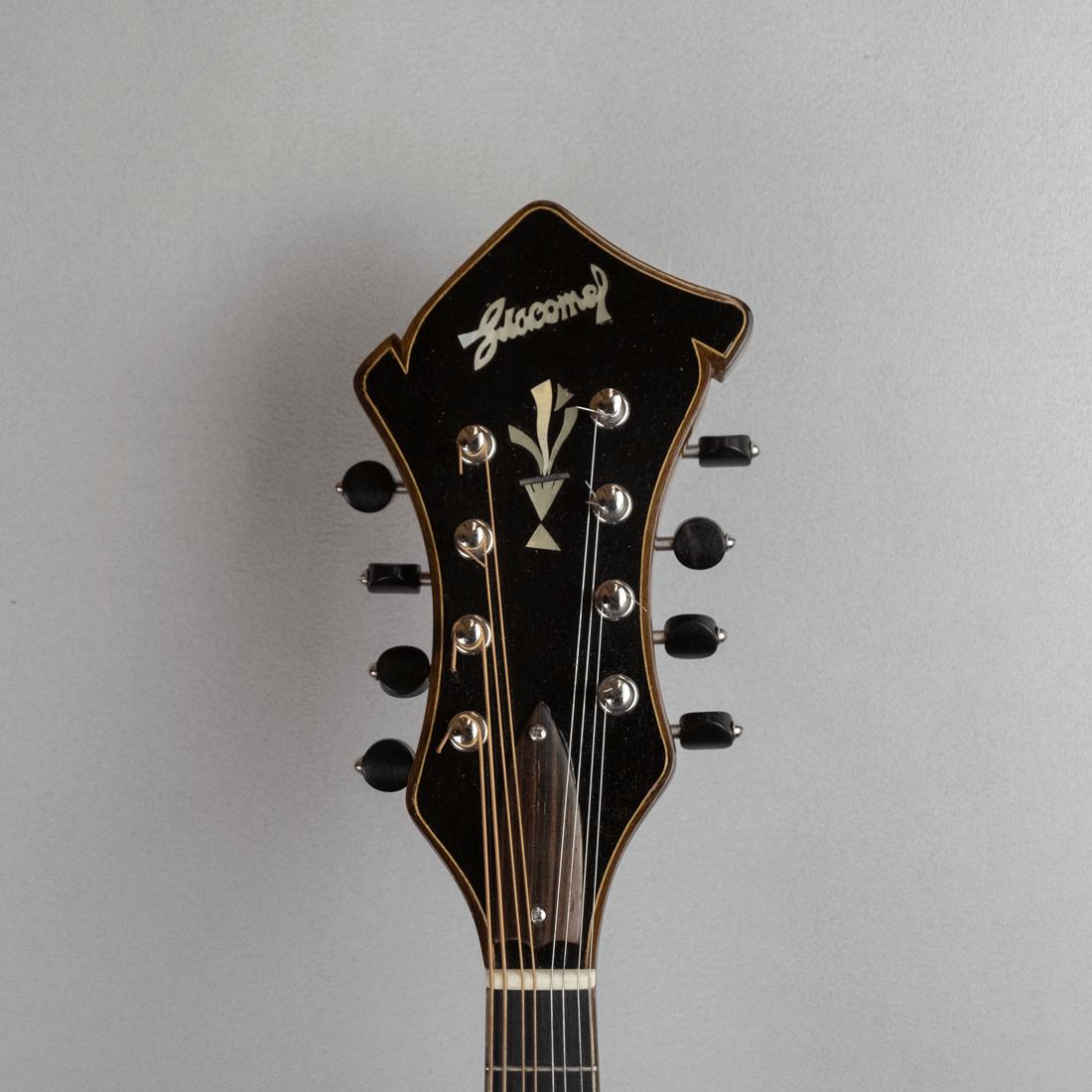 mandolin jazz 3 headstock